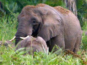 Elephants in Omo National Park, Ethiopia