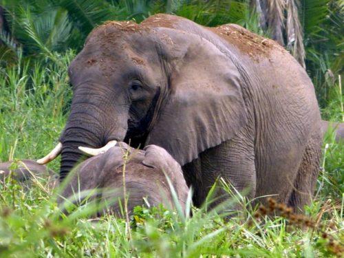 Eléphants dans le Parc National Omo, Éthiopie
