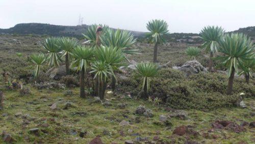 Paysage du Parc National du Balé, Ethiopie du Sud
