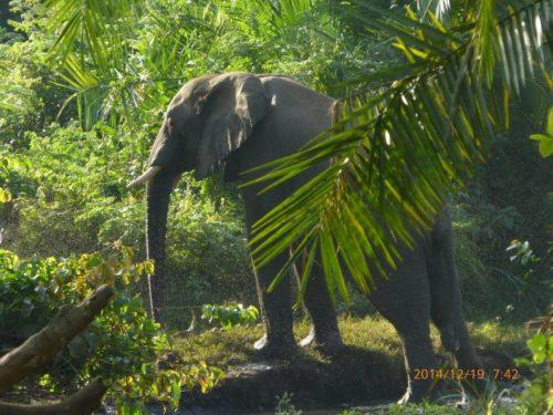 Eléphants du parc national Chebera Chuchura, Ethiopie